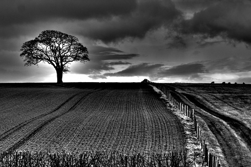 """The One Tree"" captured by Colin Jennings"