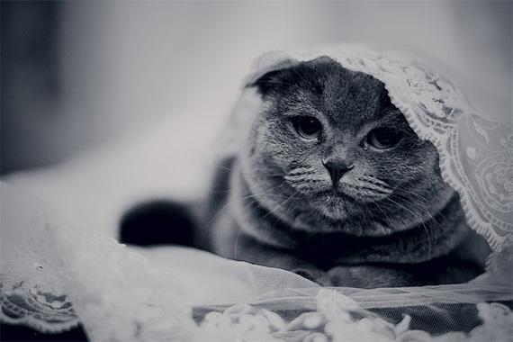 photos of kittens